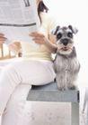 家庭宠物0078,家庭宠物,休闲生活,坐姿 看报 长毛狗
