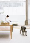 家庭宠物0080,家庭宠物,休闲生活,闲逛 家中 宠物