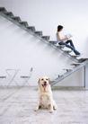 家庭宠物0086,家庭宠物,休闲生活,楼梯 坐姿 空间