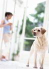 家庭宠物0093,家庭宠物,休闲生活,宠物 窗户 阳光