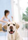 家庭宠物0096,家庭宠物,休闲生活,名犬 舌头 耳朵