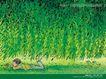 几米0022,几米,标题插画,小孩 绿树 草地
