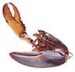 食材海鲜0026,食材海鲜,美食,海鲜 虾子 外壳