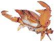 食材海鲜0027,食材海鲜,美食,