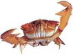 食材海鲜0029,食材海鲜,美食,
