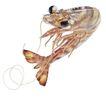 食材海鲜0036,食材海鲜,美食,虾子 食材 食物