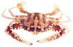 食材海鲜0054,食材海鲜,美食,
