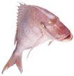 食材海鲜0057,食材海鲜,美食,