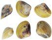 食材海鲜0066,食材海鲜,美食,贝壳 鲜美 海货
