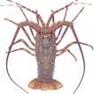 食材海鲜0067,食材海鲜,美食,虾子 触角 虾脚