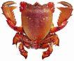 食材海鲜0068,食材海鲜,美食,大闸蟹 蟹壳 成熟
