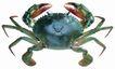 食材海鲜0070,食材海鲜,美食,螃蟹 蟹脚 蟹钳