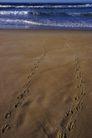海滩0092,海滩,海洋风情,沙滩 脚印 痕迹
