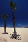海滩0095,海滩,海洋风情,海滩 芭蕉 自行车