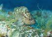 深海鱼0086,深海鱼,海洋风情,海类 底层 游泳