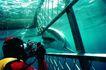 深海鱼0088,深海鱼,海洋风情,参观 拍摄 鱼类