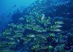 深海鱼0090,深海鱼,海洋风情,眼花缭乱 繁多 色彩