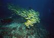 深海鱼0091,深海鱼,海洋风情,鱼群 海底 礁石