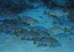 深海鱼0092,深海鱼,海洋风情,深海 鱼类 游泳