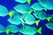 深海鱼0096,深海鱼,海洋风情,深海鱼 颜色 美丽