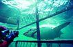 深海鱼0102,深海鱼,海洋风情,鲨鱼 生物 海底世界