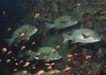 深海鱼0105,深海鱼,海洋风情,石壁 鱼儿