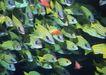 深海鱼0107,深海鱼,海洋风情,