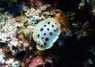 深海鱼0119,深海鱼,海洋风情,