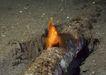 深海鱼0120,深海鱼,海洋风情,