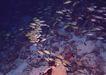 深海鱼0121,深海鱼,海洋风情,