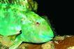 深海鱼0126,深海鱼,海洋风情,
