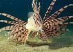 深海鱼0129,深海鱼,海洋风情,