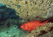深海鱼0131,深海鱼,海洋风情,