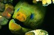 深海鱼0135,深海鱼,海洋风情,海洋 风情 深海鱼