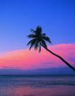 海边景致0076,海边景致,海洋风情,倾斜 椰树 侧倒