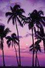海边景致0077,海边景致,海洋风情,月光 升起 天际