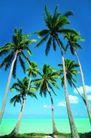 海边景致0080,海边景致,海洋风情,高耸 椰林 果树