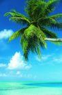 海边景致0084,海边景致,海洋风情,椰树 阳光 沙滩