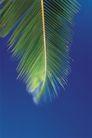 海边景致0086,海边景致,海洋风情,树枝 挂立 海岸