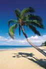 海边景致0091,海边景致,海洋风情,热带 风景 椰子树