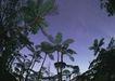 人间天堂0064,人间天堂,海洋风情,热带 植物 绿叶
