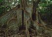 人间天堂0069,人间天堂,海洋风情,古树 树林 景色