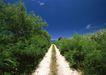 人间天堂0070,人间天堂,海洋风情,小道 灌木 蓝天