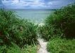 人间天堂0073,人间天堂,海洋风情,林间 小路 灌木
