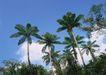 人间天堂0074,人间天堂,海洋风情,椰林 热带 经济 作物