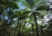 人间天堂0078,人间天堂,海洋风情,橡胶 树林 茂盛