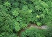 人间天堂0079,人间天堂,海洋风情,低矮 绿叶 覆盖