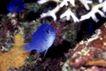 海洋生态0023,海洋生态,海洋风情,海鱼 海底 世界