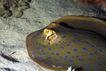 海洋生态0024,海洋生态,海洋风情,乌贼 生物 生长