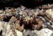 海洋生态0030,海洋生态,海洋风情,